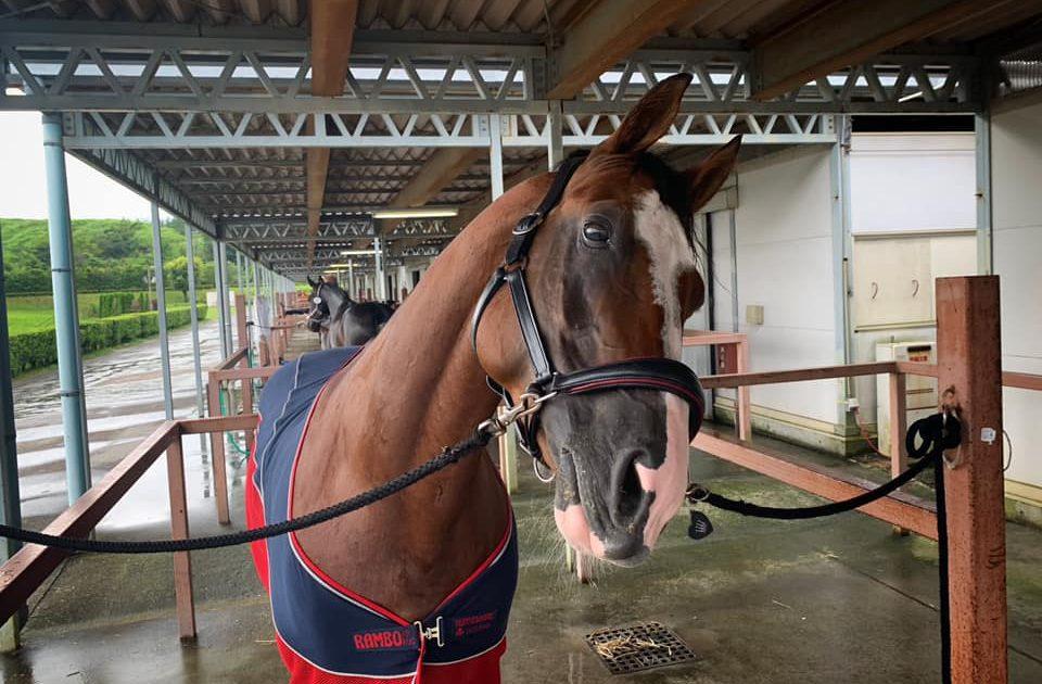 第35回全日本ジュニア馬場馬術大会2019